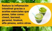 Propiedades del cilantro para adelgazar